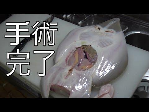 正体不明のなぞの魚をさばいてみた。【モザイクなし】