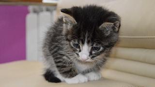 Отдам котёнка в хорошие руки. Минск