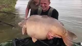 New world carp record 2017/ neuer karpfen Weltrekord 49 kilo/108lbs