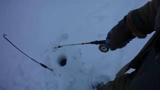 Ловля щуки зимой на блесну.