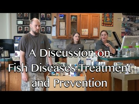 A Discussion on Fish Diseases Treatment and Prevention