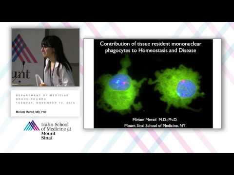 Contribution of Tissue Resident Mononuclear Phagocytes to Homeostasis and Disease