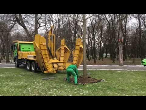 Nagy ásni pénisz