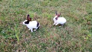 Cute Funny Rabbit  / Bunny Awesome Part 1