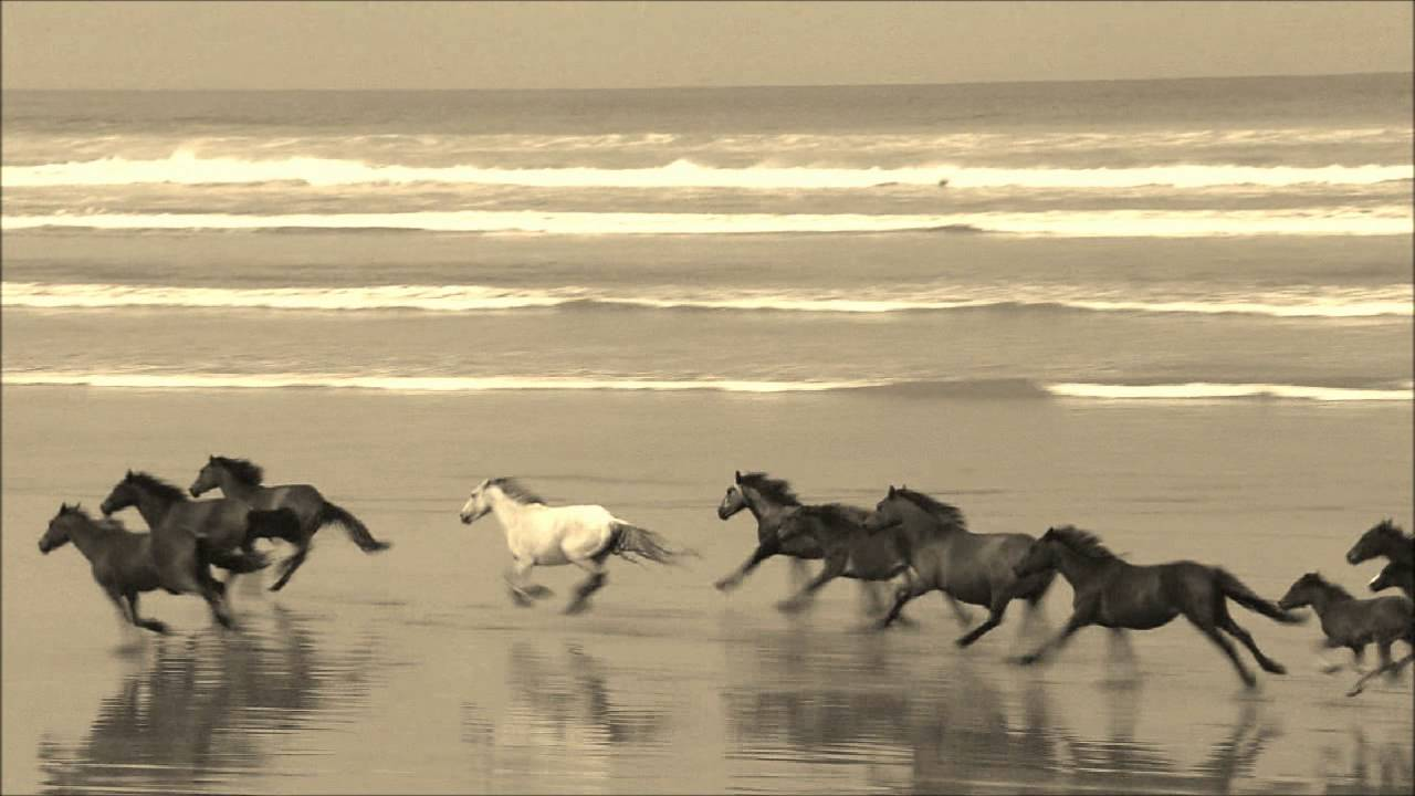 Horses Galloping Along The Beach Youtube