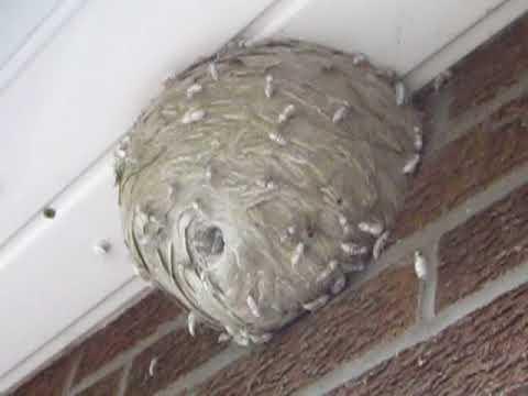 Easy nest to treat