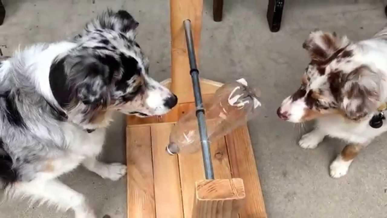 Dog Treat Dispenser >> Home Made Dog Treat Dispenser Youtube