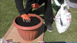 GARDEN (74) - Gladiole w koszyczkach i w donicy - MIX blue - MIX green