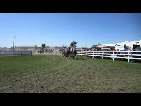 Heavy Horses at the 2011 Richmond Fair outside Ottawa