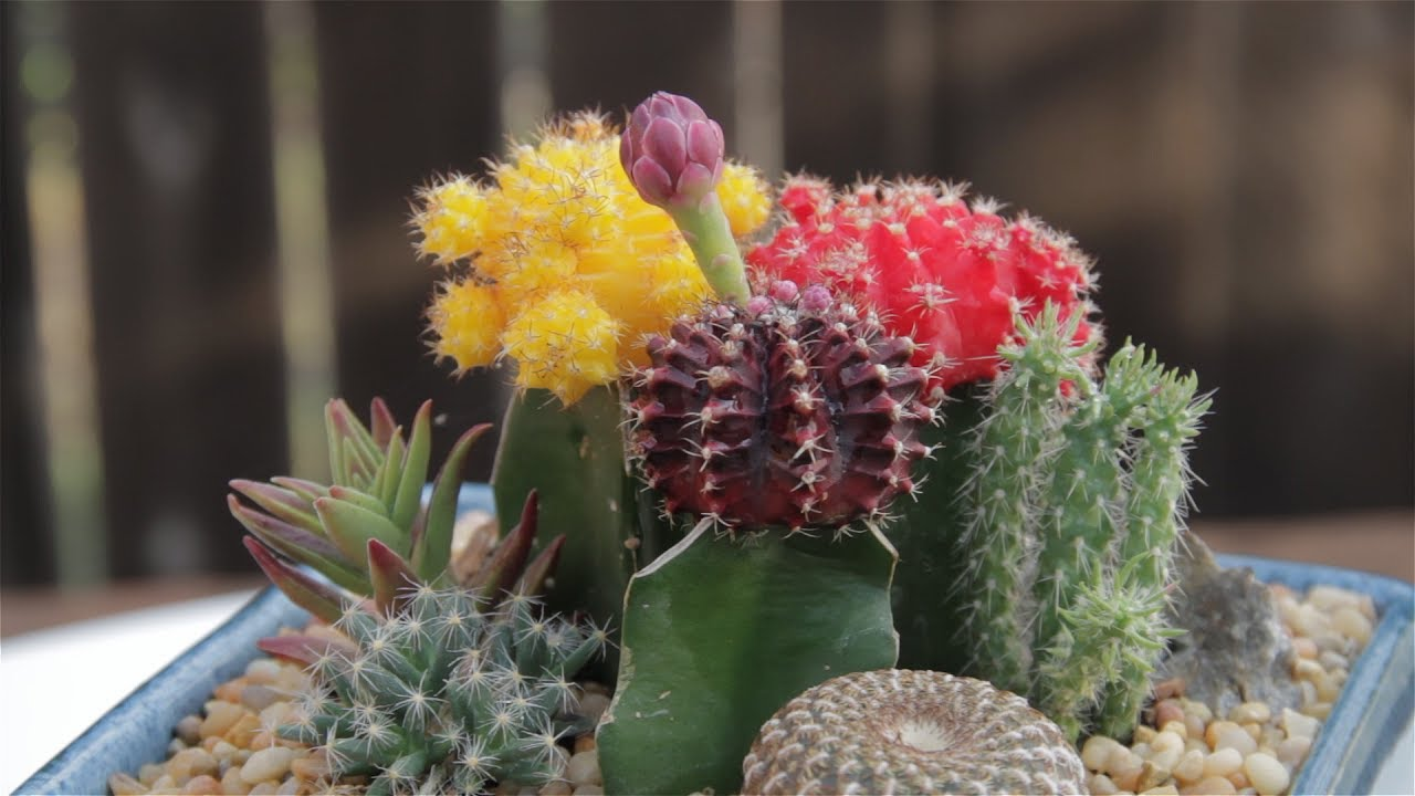 Charming Pretty Cactus Container Garden