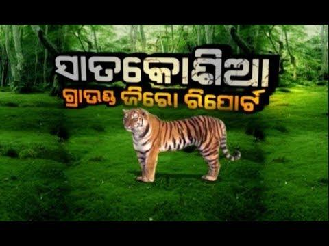 Ground Zero Report: Tigress