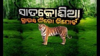 "Ground Zero Report: Tigress ""Sundari""In Satkosia"