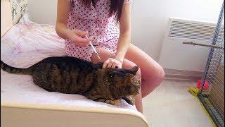 Делаю коту Марсику укол инсулина. У Марсика сахарный диабет, уколы надо делать 2 раза в день