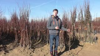 Repeat youtube video VERMEIDE diese Fehler! Die größten Fehler mit Obstbäumen im Hausgarten