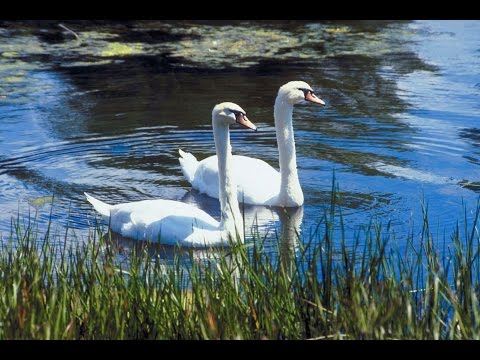 W.B.Yeats The Wild Swans at Coole