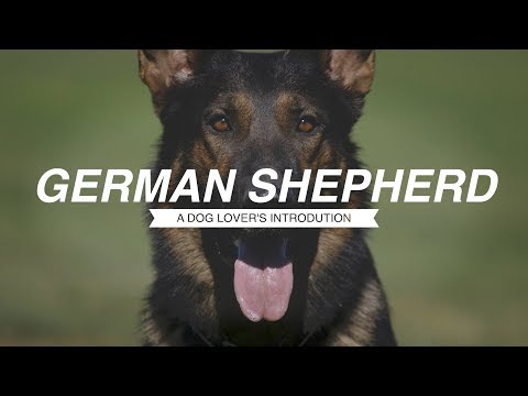 GERMAN SHEPHERD: A DOG LOVER'S INTRODUCTION