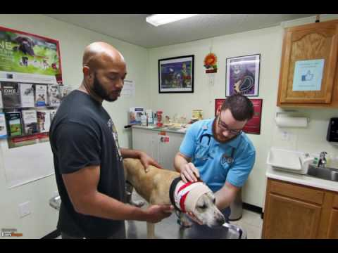 NOLA Animal Clinic | New Orleans, LA | Veterinarians