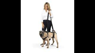 Шлейка для пожилых, больных собак Solvit CareLift: как использовать