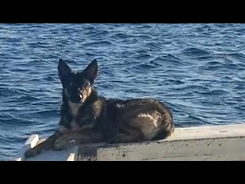 Miracle dog found alive after falling off boat 5 weeks ago