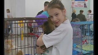 Бездомных животных раздавали на выставке в Петрозаводске