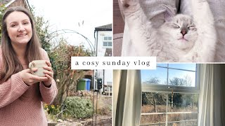 Cosy Sunday Vlog ~ Simple Living, Enjoying Time In The Garden & Time With Ragdoll Kitten
