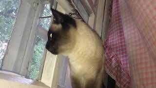 Кошка на подоконнике животные pets