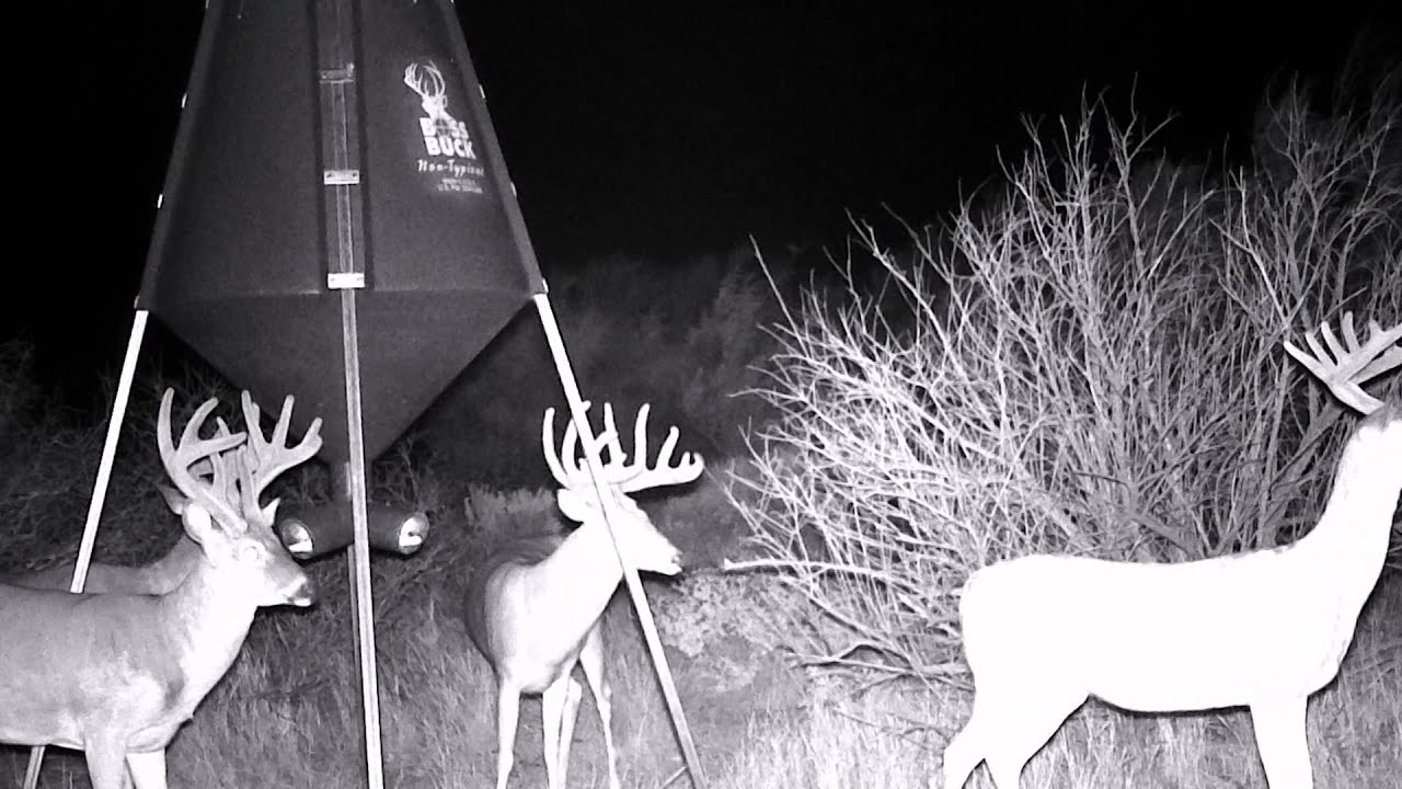 of muddy feeder ground outdoors hunter trail what buck boss are scouting you deer public style feeders cameras