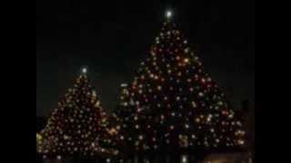 立教大学のクリスマスツリーです。 今回は下にもぐってみましたが...画...
