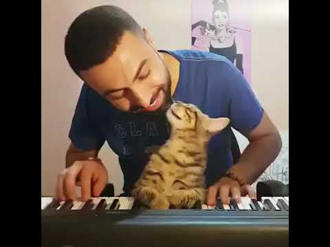 A cat enjoys Listening to Piano  incredible !!