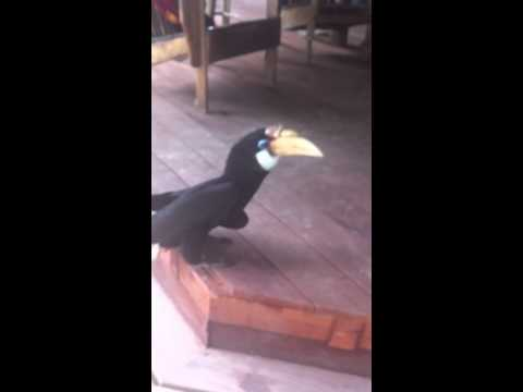 Vogel hat einen Vogel