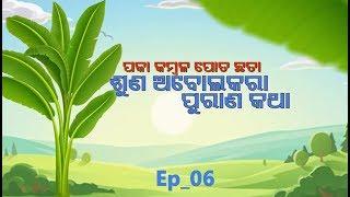 Paka Kambala Pota Chhata,Suna Abolakara Purana Katha | Full Ep - 6 | 13 Oct 19 | TarangTV