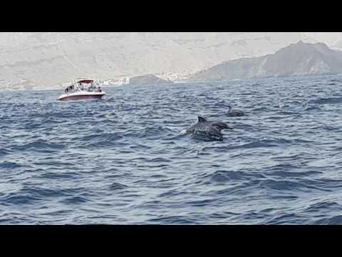 Dolphin spotting @ Sidab, off Muscat, Oman (18 June 2016)