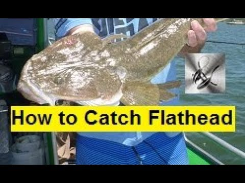 Flathead Fishing Botany Bay | The Hook and The Cook