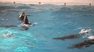 Дельфины)Игры))