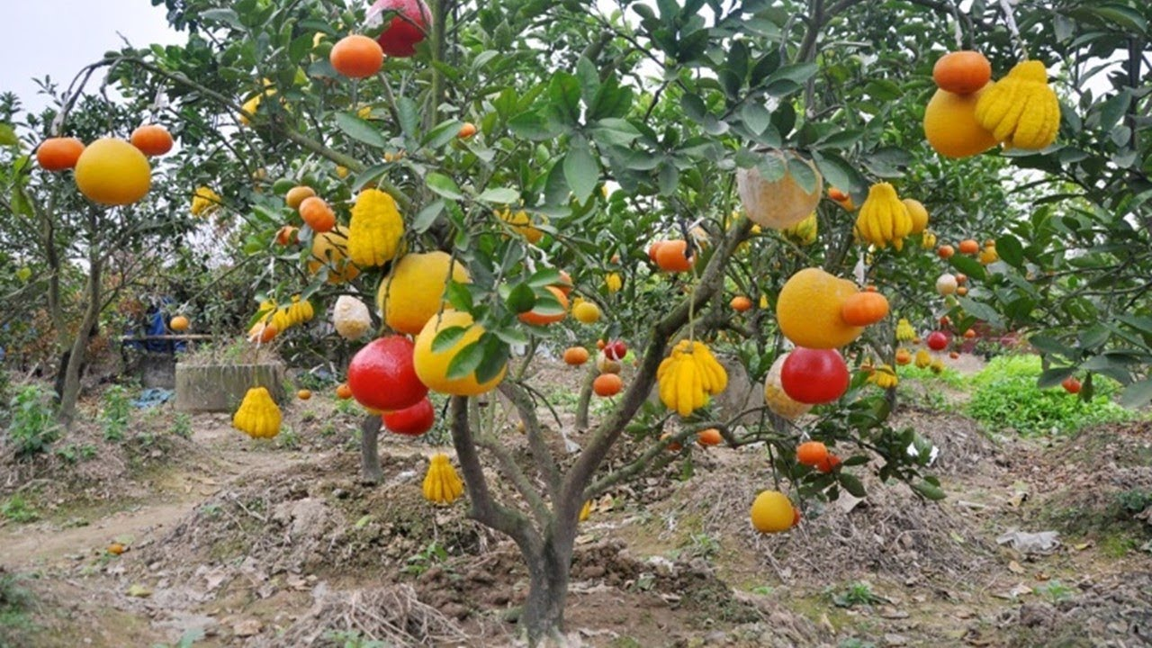 10 Types Per Tree So Amazing Bonsai Fruits Youtube