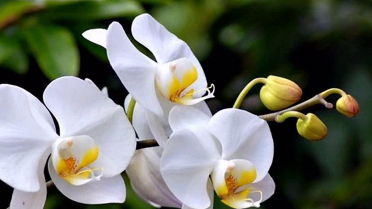 chau-lan-nhu-y-flowerbi-dep