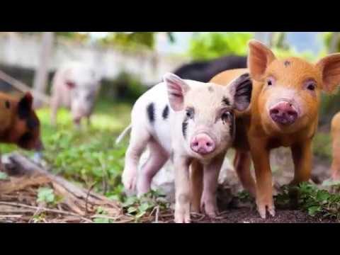 Dr. Alex Hershaft - A Journey From The Holocaust To Animal Rights