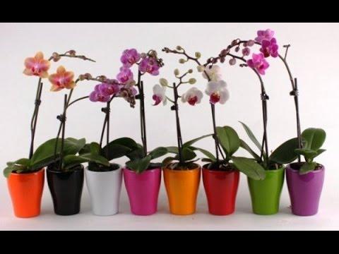 Уход за орхидеями — Клуб любителей орхидей