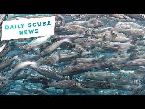 Daily Scuba News - Sardine Fishing Banned In California