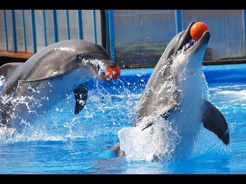 Дельфинарий в Анапе, Большой Утриш