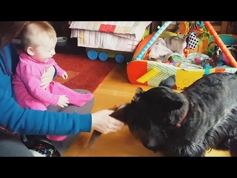 'Babies Laughing at Dogs Compilation' || CFS