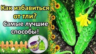 видео Бахчевая тля