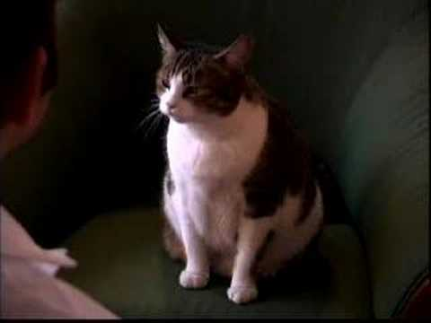 Cat News (Episode One)