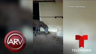 Denuncian la crueldad de animales en el zoológico de México | Al Rojo Vivo | Telemundo