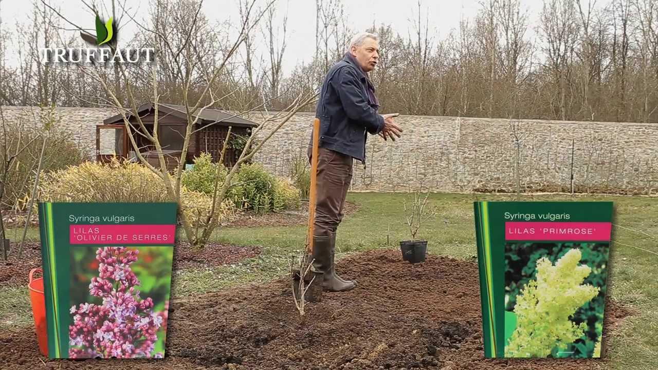 Planter Un Lilas En Pot lilas : plantation et entretien - jardinerie truffaut tv
