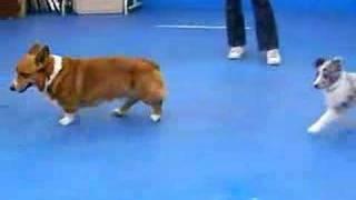 犬の学校で遊ぶ、ガンボとロイ.