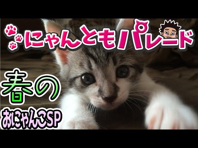 【みんなの猫】春のおにゃんこSP〜にゃんともパレード〜