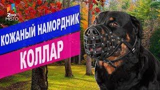 Кожаный намордник для собак | Обзор кожаный намордник для собак Collar