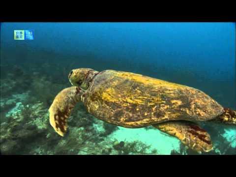 Belize Barrier Reef Reserve System (UNESCO/TBS)