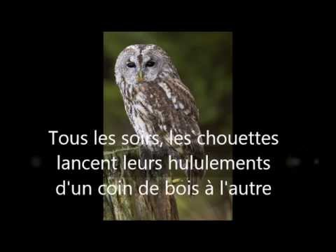 💖 Chant de la chouette hulotte / Song of the tawny owl